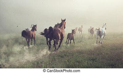 Un grupo de caballos en la pradera