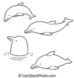 Un grupo de delfines