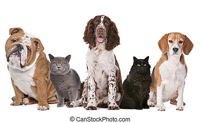 Un grupo de gatos y perros