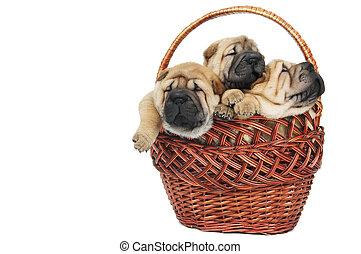 Un grupo de perritos en la canasta