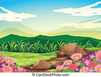 Un hermoso paisaje