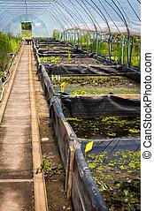 Un invernadero grande, planta infantil, jardín central