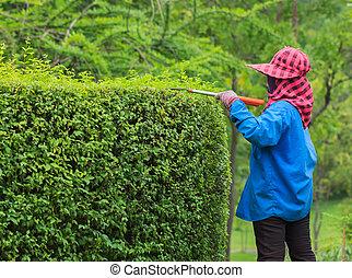 Un jardinero profesional podando un seto en Tropical Park