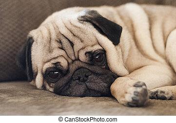 Un lindo perro de peluche tirado en el suelo