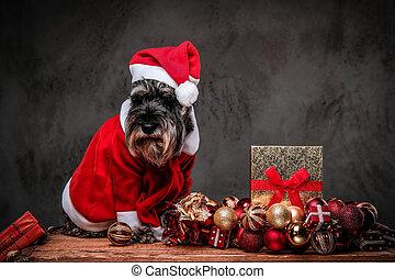 Un lindo terrier escocés con el disfraz de Santa sentado en un palé de madera rodeado de regalos y pelotas en Navidad.