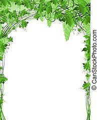 Un marco de uva verde