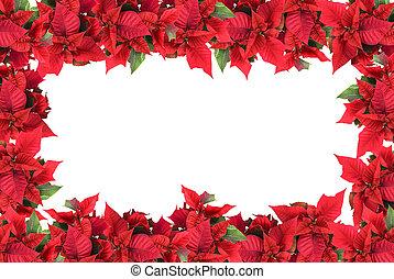 Un marco navideño de poinsettias aislado en blanco