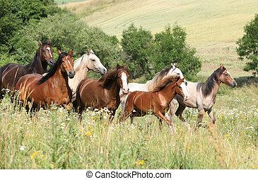 Un montón de caballos corriendo en flores