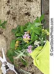 Un montón de hierbas frescas y tijeras de jardín sobre fondo de madera