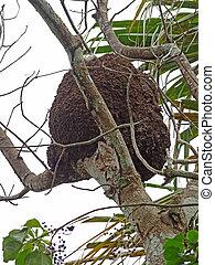 Un nido de termitas arbóreas