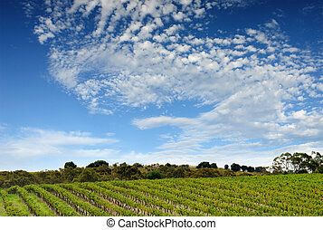 Un paisaje australiano de viñedos