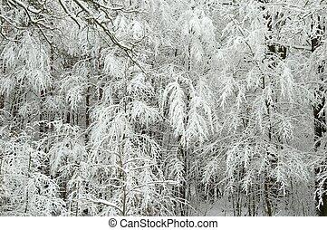 Un paisaje de invierno tras una tormenta de nieve