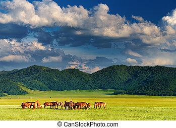 Un paisaje de montaña con caballos pastando al atardecer