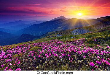 Un paisaje de montaña