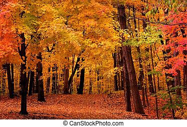 Un paisaje de otoño