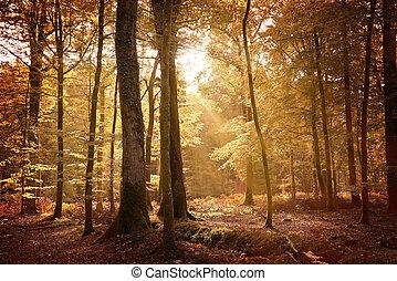 Un paisaje de otoño en el nuevo bosque