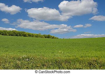 Un paisaje de verano