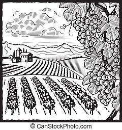 Un paisaje de viñedos blanco y negro