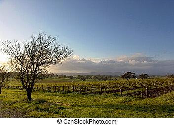 Un paisaje de viñedos