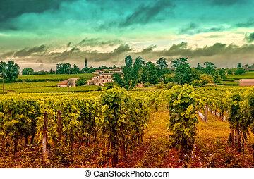 Un paisaje de vino