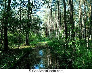 Un paisaje forestal flotante.