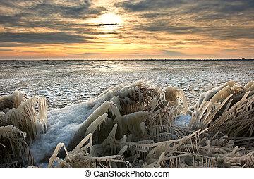 Un paisaje frío de invierno con caña cubierta de hielo