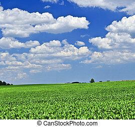 Un paisaje rural