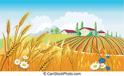 Un paisaje rural con campos