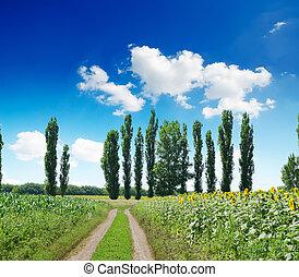 Un paisaje rural con un camino bajo un cielo azul oscuro