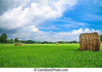 Un paisaje rural de verano con un campo y heno