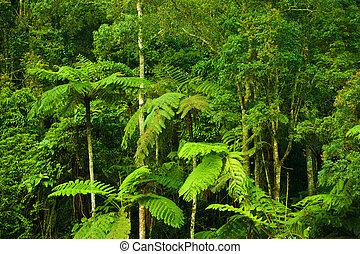 Un paisaje tropical denso de bosque