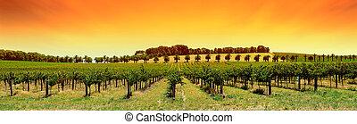 Un panorama de viñedos