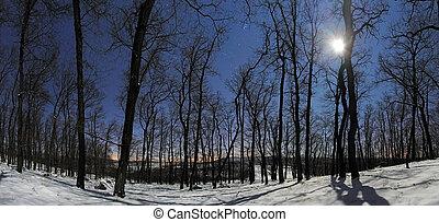 Un panorama forestal en la noche de luna de invierno
