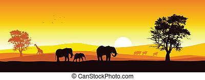 Un panorama safari
