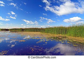 Un pantano de verano bajo el cielo nublado