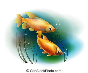 Un par de peces en el mar