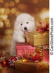 Un perrito con regalos de Navidad