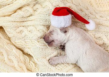 Un perrito labrador recién nacido con sombrero de Santa durmiendo