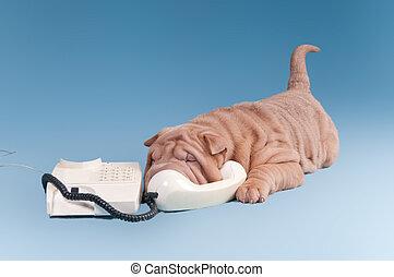 Un perrito Sharpei hablando por teléfono