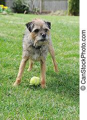 Un perro canino puramente terrier