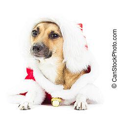 Un perro de pelo rojo encantador vestido de Navidad