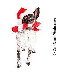 Un perro de Santa Claus con un bastón de juguete
