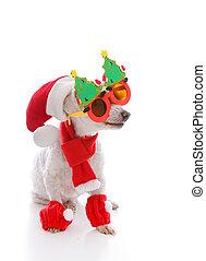 Un perro feliz usando un sombrero de Santa, gafas de Navidad cómicas, bufanda y talas