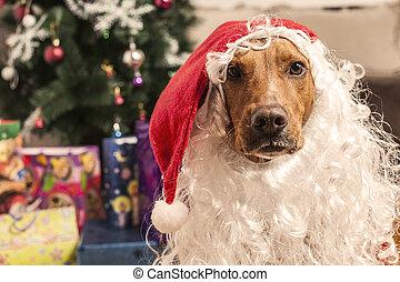Un perro grande con sombrero de Santa de Navidad