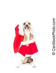 Un perro pelirrojo con trajes de Navidad sobre fondo blanco