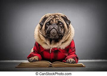 Un perro peludo en un libro viejo.