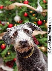Un perro Terrier cerca del árbol de Navidad condecorado