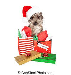Un perro Terrier Santa con regalos
