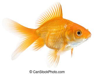 Un pez de colores