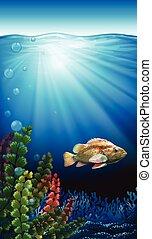 Un pez